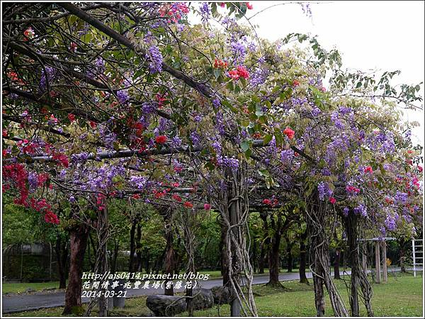 2014-03-兆豐遇紫藤花13.jpg