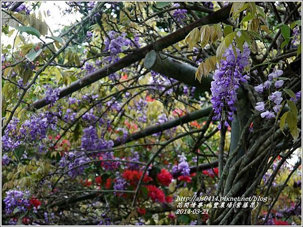 2014-03-兆豐遇紫藤花14.jpg