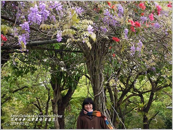 2014-03-兆豐遇紫藤花18.jpg