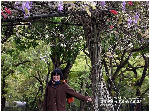 2014-03-兆豐遇紫藤花19.jpg