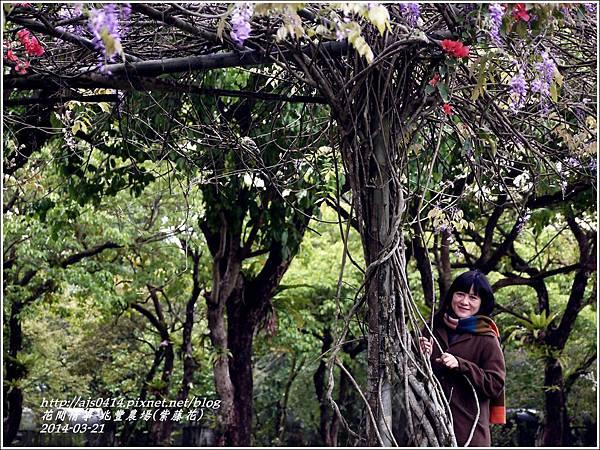 2014-03-兆豐遇紫藤花20.jpg