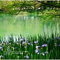 2014-04-雲山水鳶尾季40.jpg