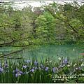 2014-04-雲山水鳶尾季7.jpg
