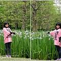 2014-04-雲山水鳶尾季25.jpg