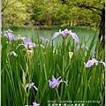 2014-04-雲山水鳶尾季29.jpg