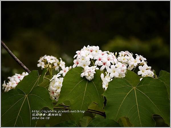 2014-04-鳳林桐花12.jpg
