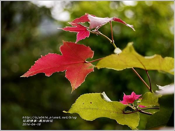 2014-04-鳳林桐花11.jpg