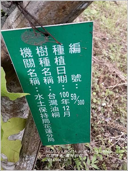 2014-04-鳳林桐花22.jpg