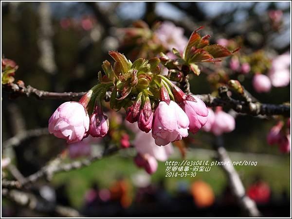 2014-04-阿里山40.jpg