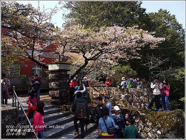 2014-04-阿里山6.jpg