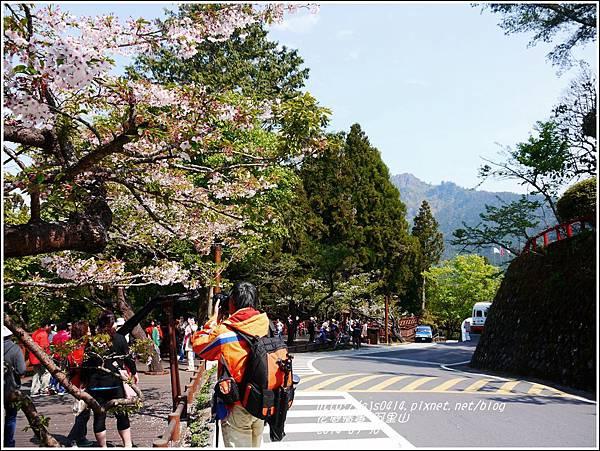 2014-04-阿里山11.jpg