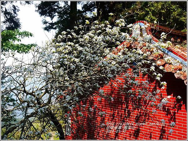 2014-04-阿里山21.jpg