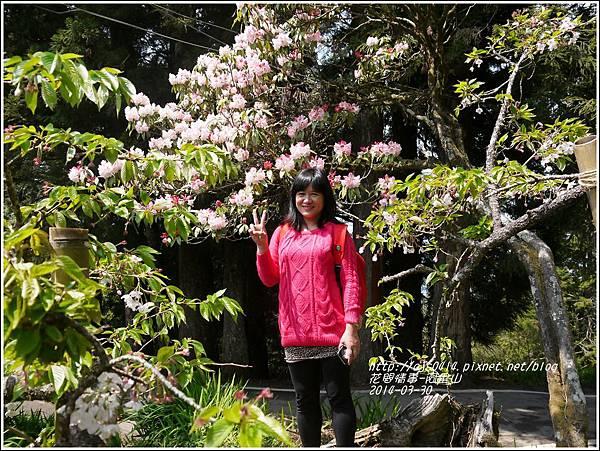 2014-04-阿里山24.jpg