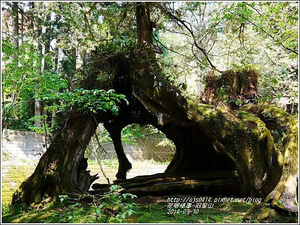 2014-04-阿里山27.jpg