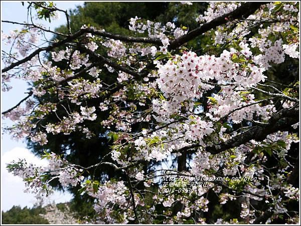 2014-04-阿里山30.jpg