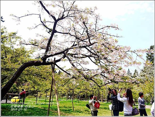 2014-04-阿里山31.jpg