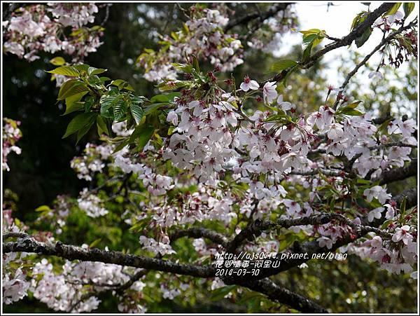 2014-04-阿里山34.jpg