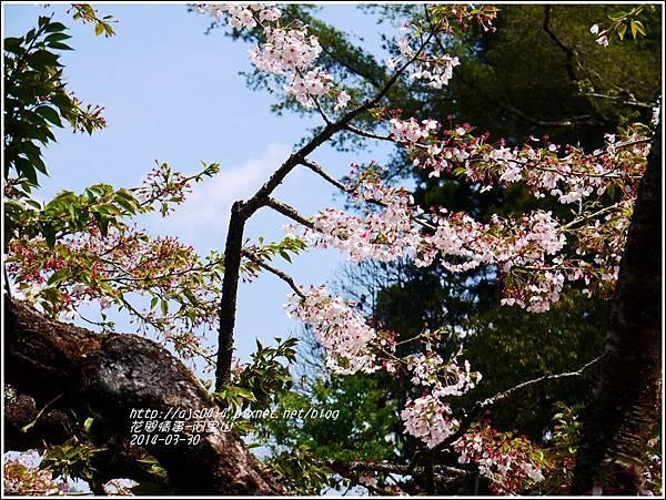 2014-04-阿里山35.jpg