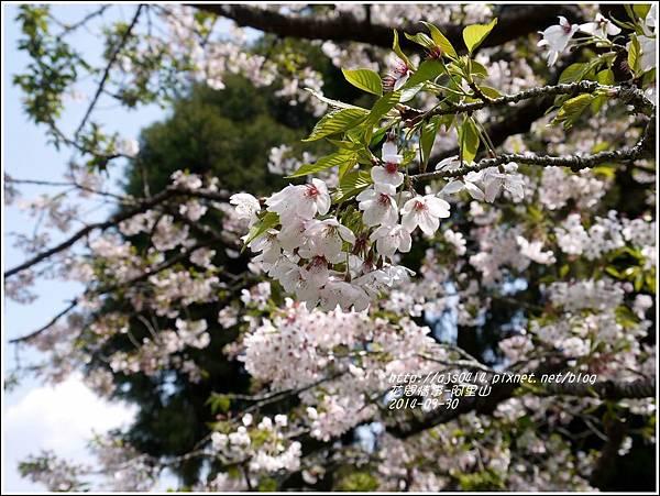 2014-04-阿里山33.jpg