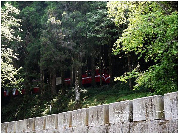 2014-04-阿里山36.jpg