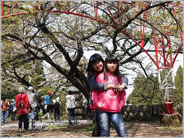 2014-04-阿里山41.jpg