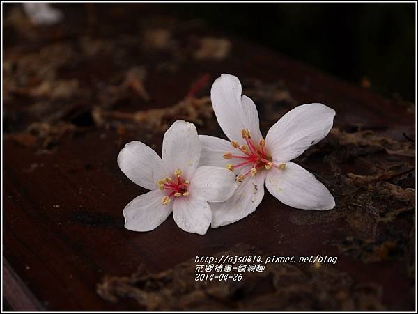 2014-04-4月雪(嬉桐趣)4.jpg