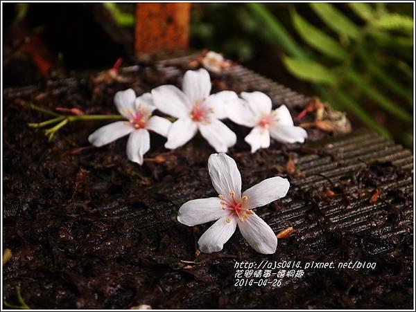 2014-04-4月雪(嬉桐趣)8.jpg