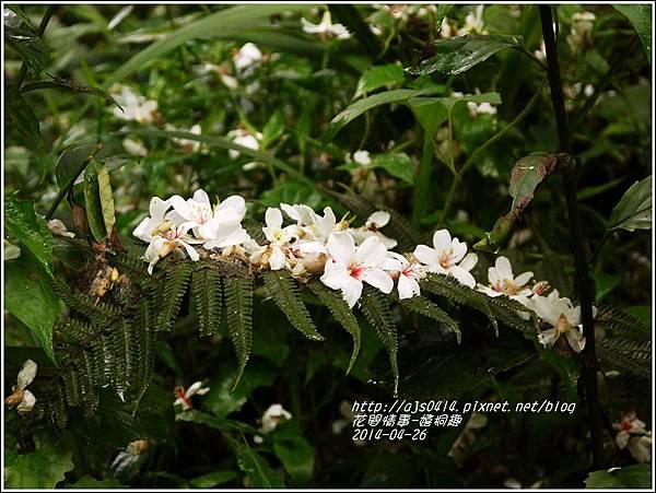 2014-04-4月雪(嬉桐趣)7.jpg