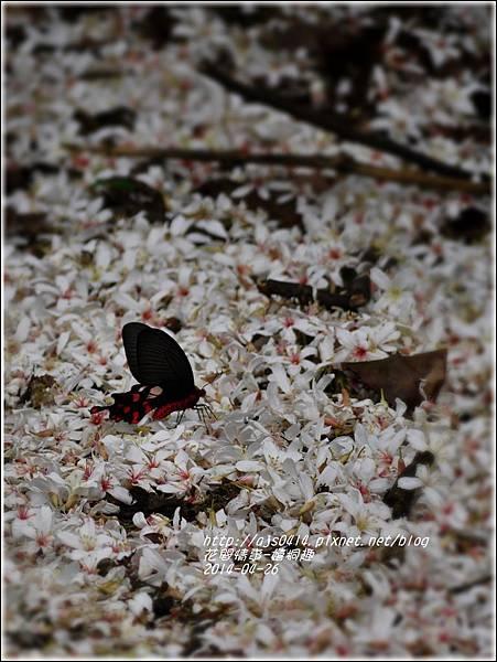 2014-04-4月雪(嬉桐趣)17.jpg