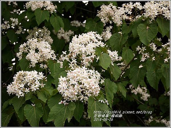 2014-04-4月雪(嬉桐趣)19.jpg