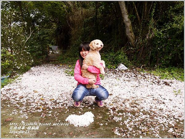 2014-04-4月雪(嬉桐趣)33.jpg