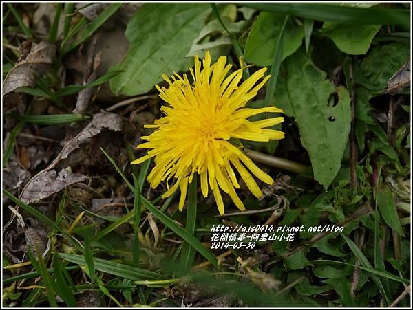 2014-04-阿里山小花.jpg