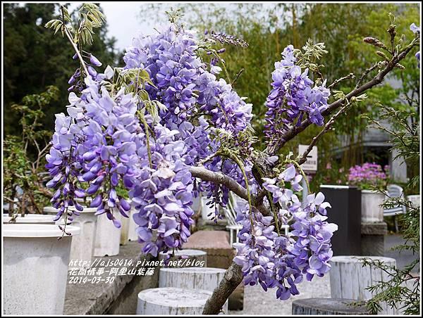 2014-04-阿里山紫藤2.jpg
