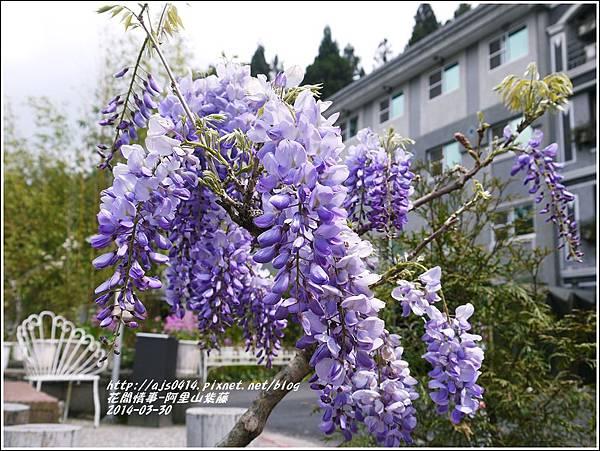 2014-04-阿里山紫藤1.jpg