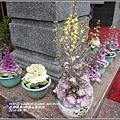 2014-04-阿里山葉牡丹1.jpg