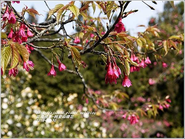2014-04-阿里山櫻花1.jpg