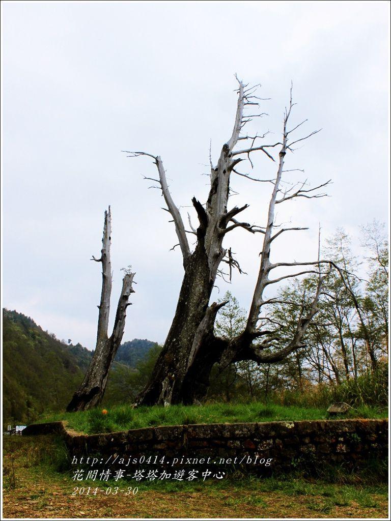 2014-04-夫妻樹.jpg