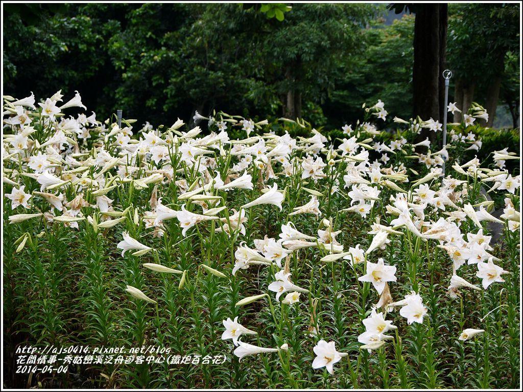 2014-05-秀姑戀溪泛舟遊客中心(鐵炮百合花)2.jpg