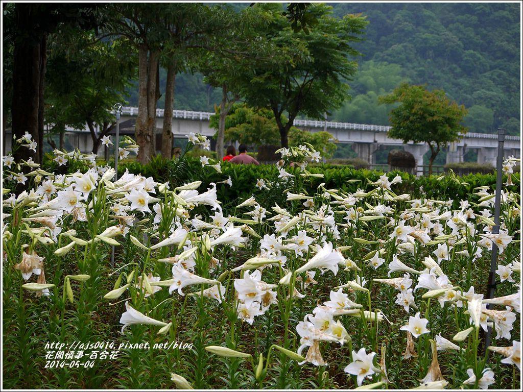 2014-05-秀姑戀溪泛舟遊客中心(鐵炮百合花)1.jpg