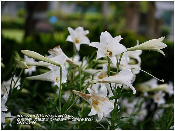 2014-05-秀姑戀溪泛舟遊客中心(鐵炮百合花)3.jpg