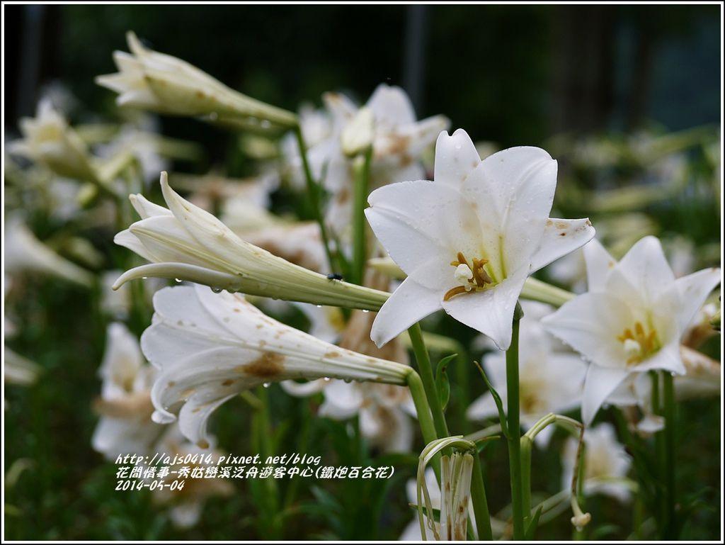 2014-05-秀姑戀溪泛舟遊客中心(鐵炮百合花)6.jpg