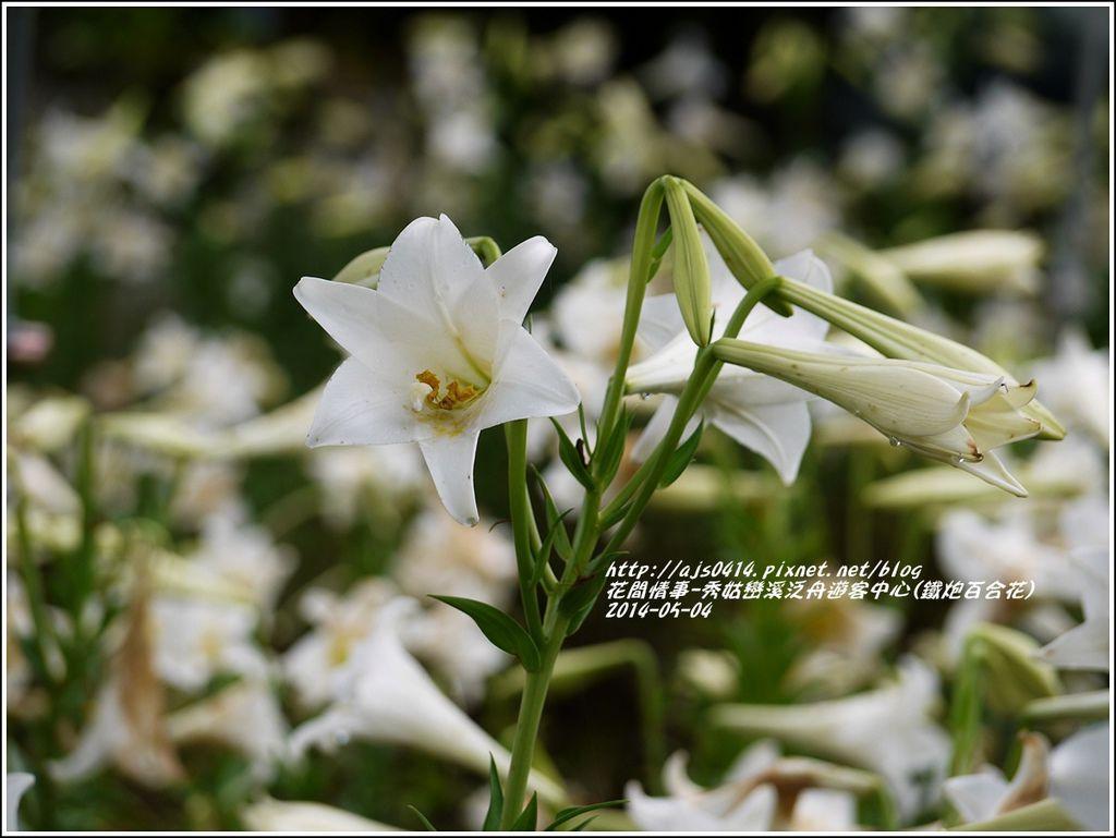 2014-05-秀姑戀溪泛舟遊客中心(鐵炮百合花)5.jpg