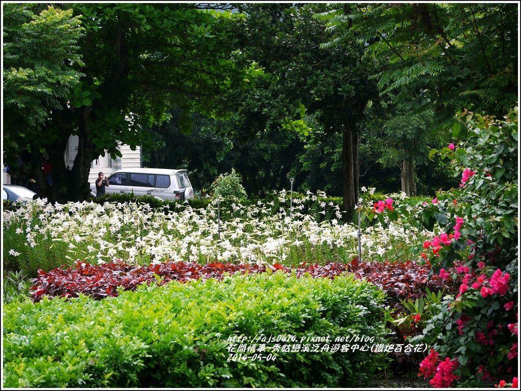 2014-05-秀姑戀溪泛舟遊客中心(鐵炮百合花)12.jpg