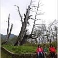 2014-04-夫妻樹1.jpg