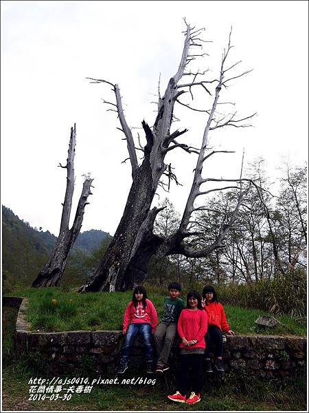 2014-04-夫妻樹2.jpg