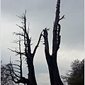 2014-04-夫妻樹3.jpg