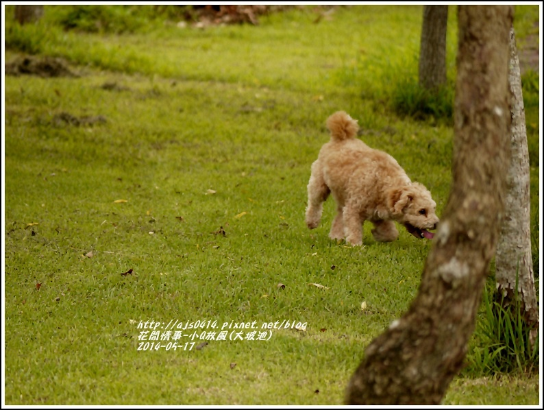 2014-05-小Q放風日(大坡池)1.jpg