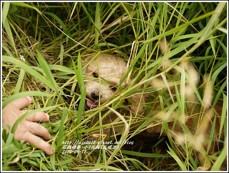 2014-05-小Q放風日(大坡池)5.jpg