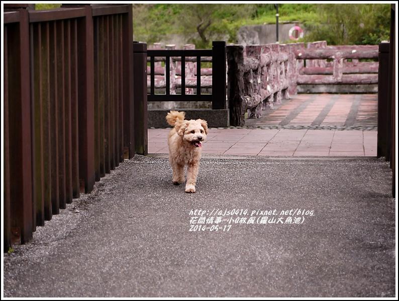 2014-05-小Q放風日(羅山大魚池)5.jpg