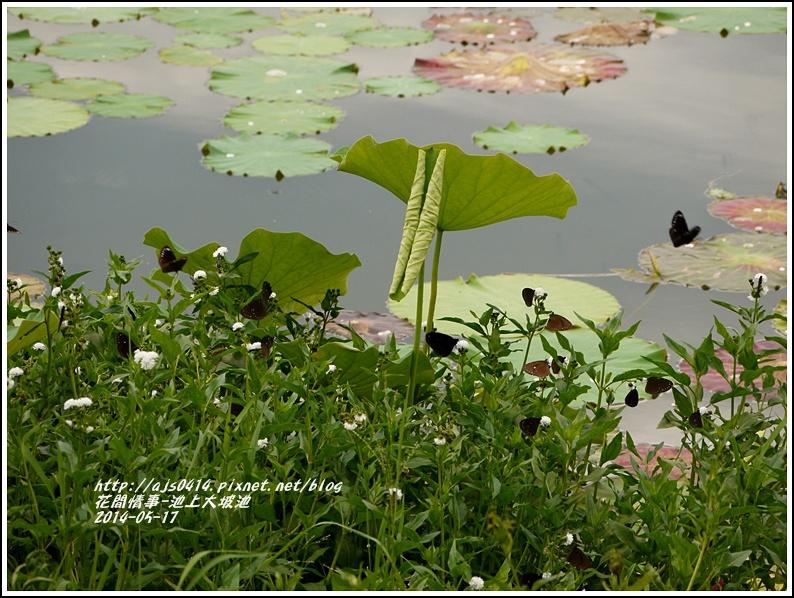 2014-05-池上大坡池10.jpg